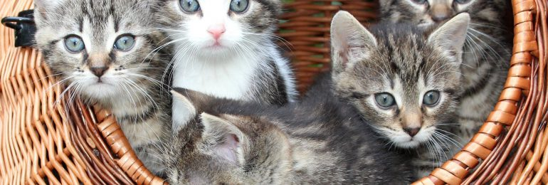 Koty też mogą leczyć