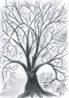Chciałbym posadzić drzewo