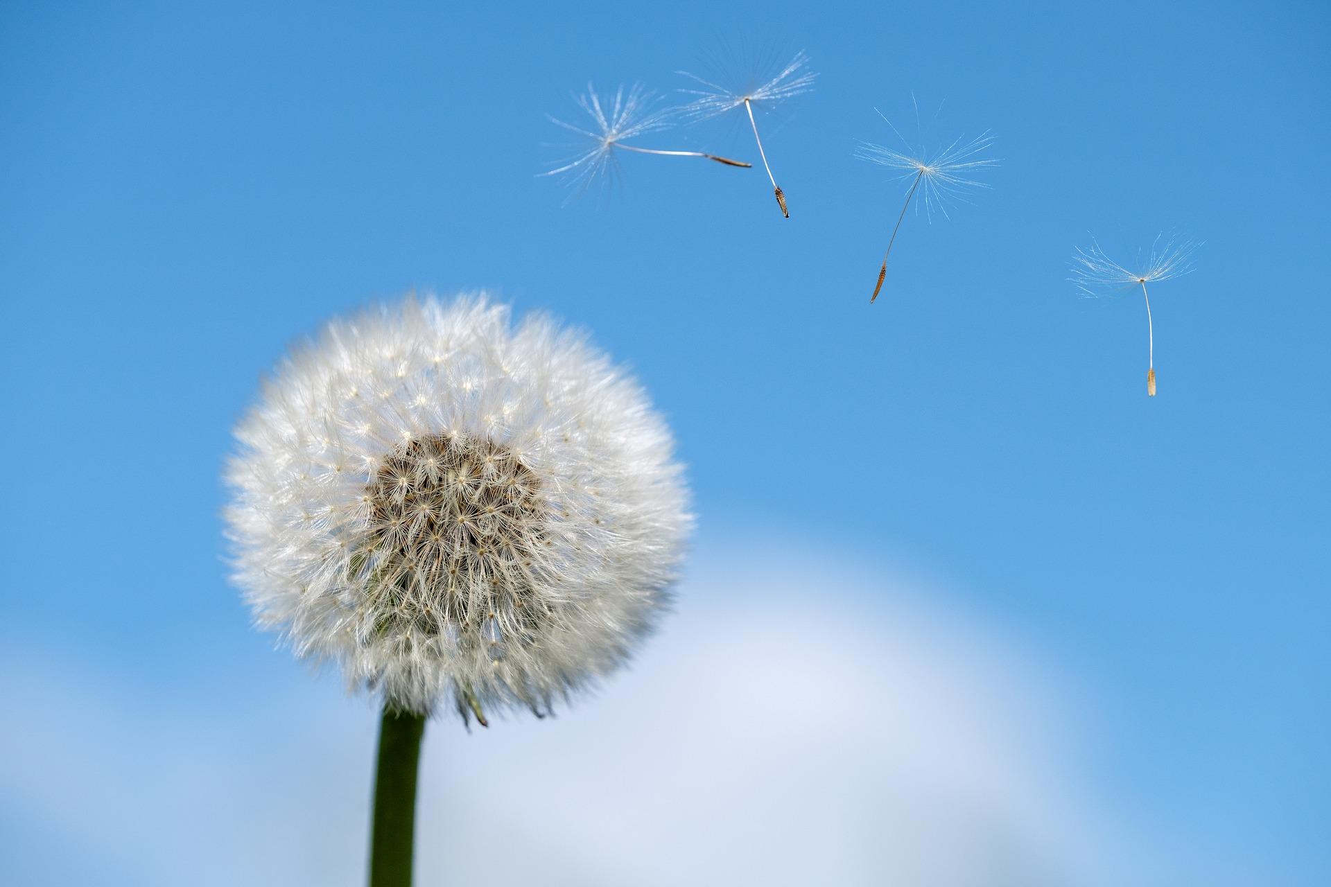 Ok. 40 proc. Polaków cierpi na objawy chorób alergicznych