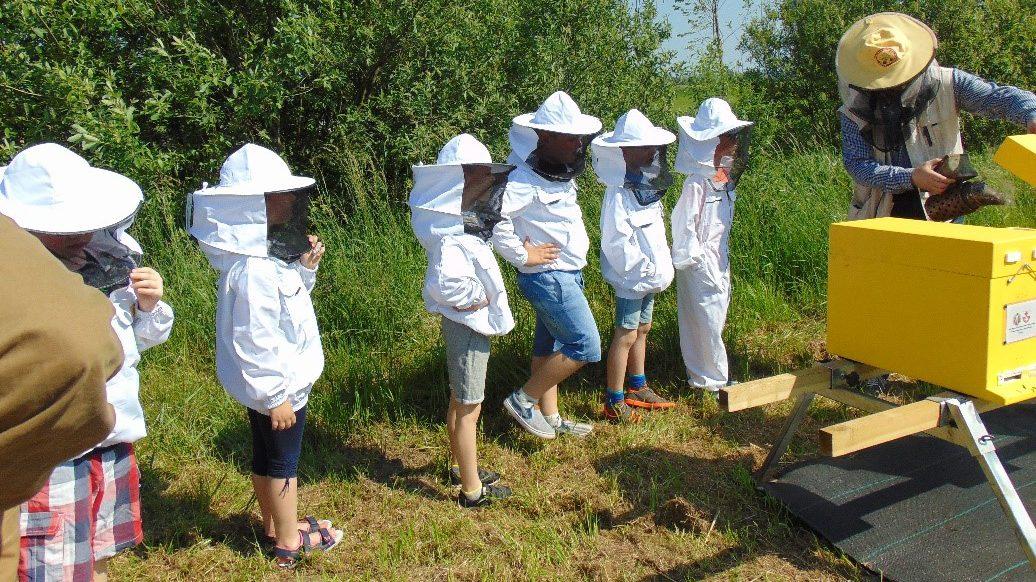 Elbląg przyjazny pszczołom