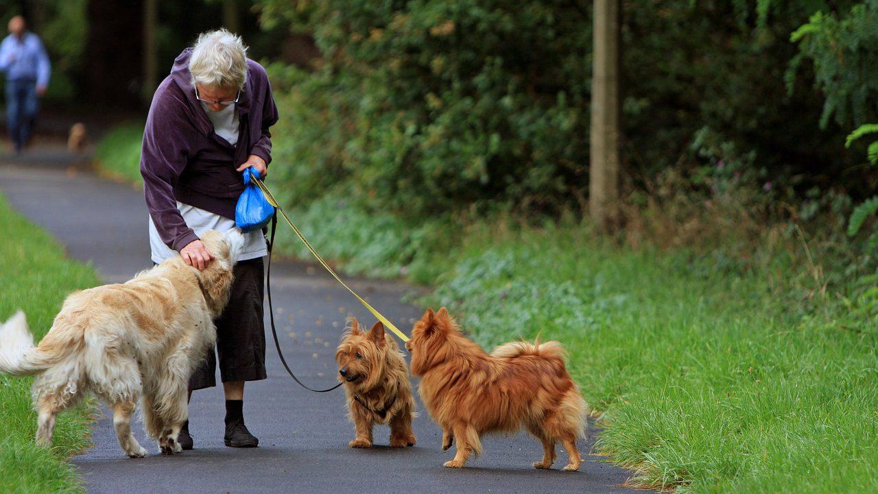 """Olsztyn: """"Kudłata terapia"""" dla seniorów"""