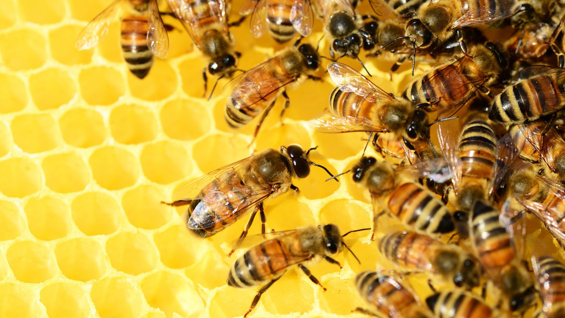 """""""Pszczoły w szkolnym ogrodzie"""" z dofinansowaniem"""