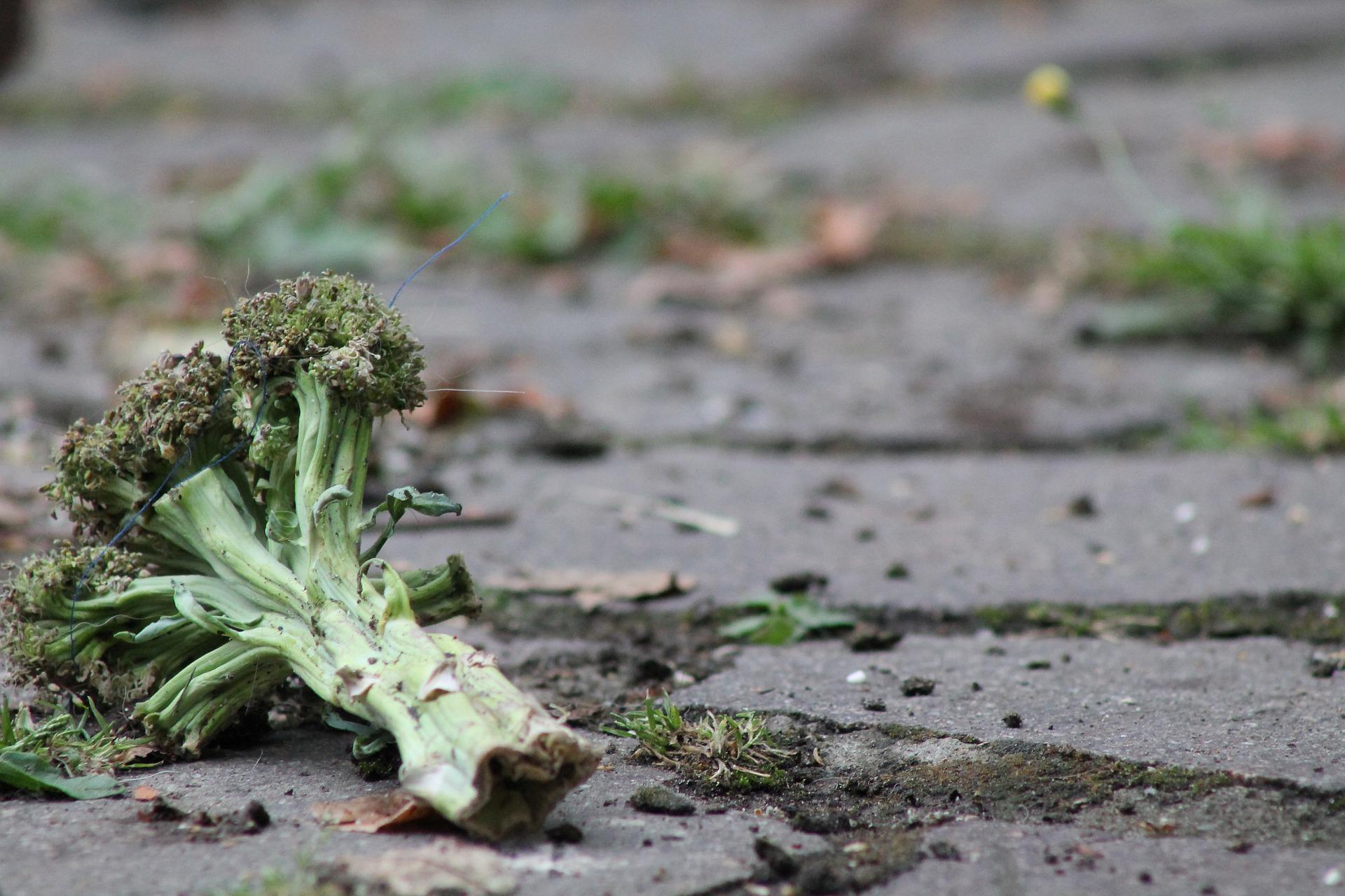 Olsztyn: Nauczą, jak nie marnować żywności