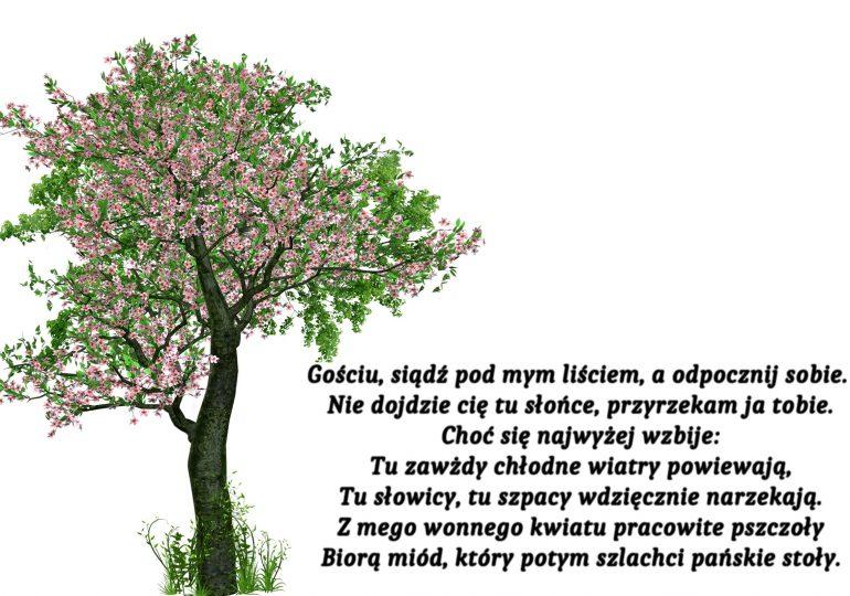 W cieniu drzewa