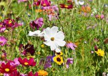 Pełna kwiatów łąka może cieszyć także w mieście