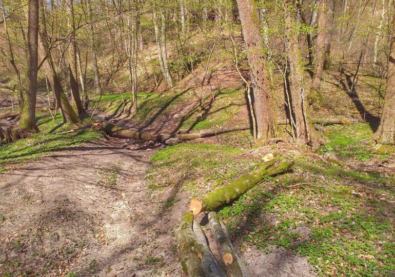 Przedsezonowe porządki w lesie