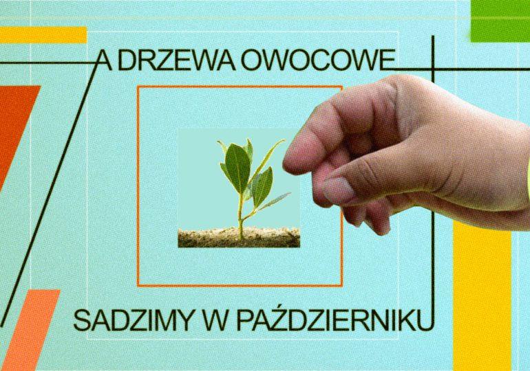 A drzewa sadzimy jesienią! – zielona akcja w Galerii EL