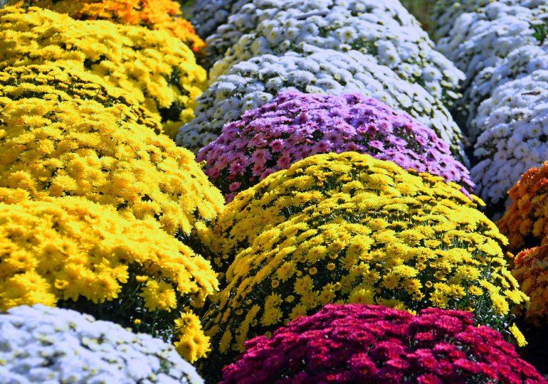 Ważne informacje dla sprzedawców kwiatów i zniczy