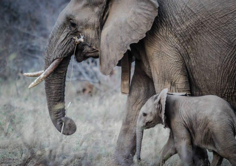 Babcie i dziadkowie w świecie zwierząt