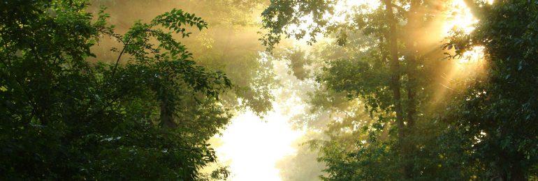 Zanurz się w lesie