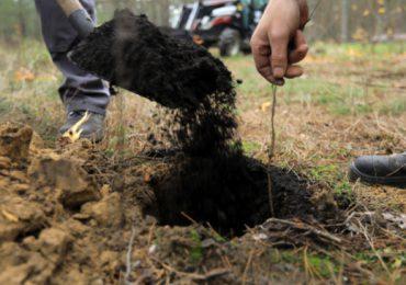 Toruń: Posadź drzewo dla pokoleń