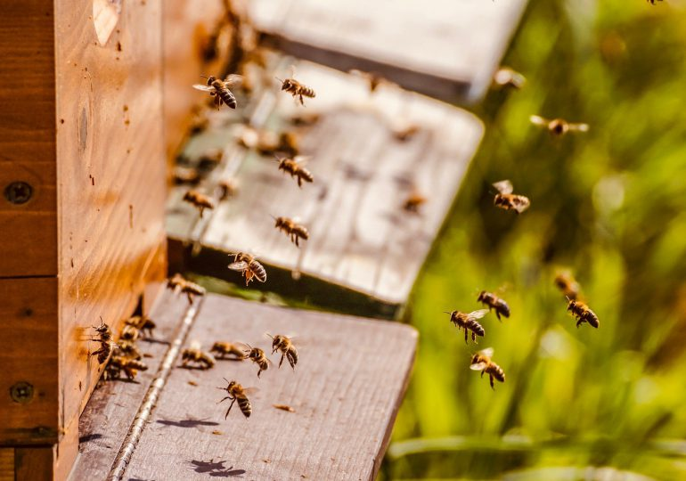Światowy Dzień Pszczół. Pamiętajmy o pożytecznych owadach