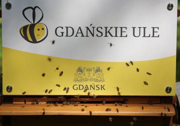 Gdańskie ule mają nowe lokatorki