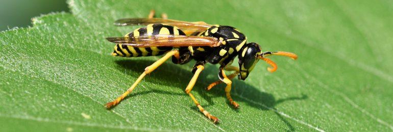 Około 30 proc. pacjentów z alergią na jad owadów przez pandemię utraciło możliwość odczulania