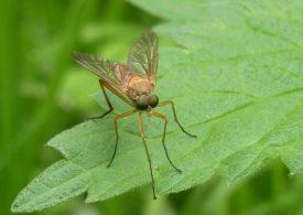 System czujników wspieranych przez sztuczną inteligencję zidentyfikuje komary przenoszące groźne wirusy