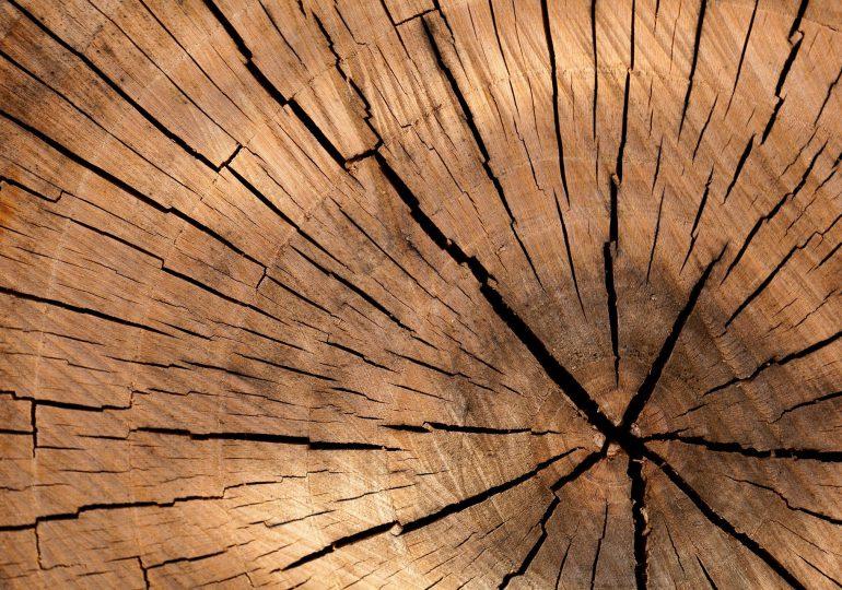 Biennale Form Drewnianych
